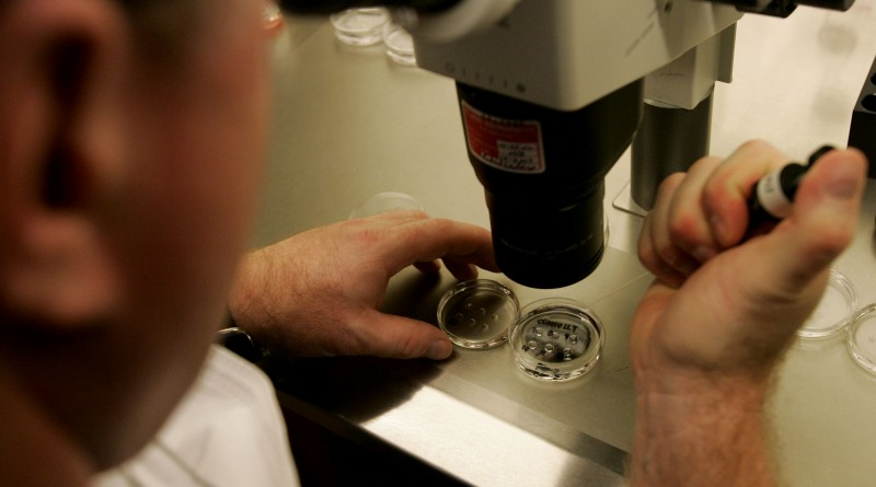 LA JOLLA, CA - FEBRUARY 28:  Embryologist Ric Ross examines a dish with human embryos under a microscope at the La Jolla IVF Clinic February 28, 2007 in La Jolla, California. The clinic accepts donated embryos from around the country through The Stem Cell resource which are then given to stem cell research labs for research.  (Photo by Sandy Huffaker/Getty Images)