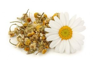 Dried chamomile tea isolated on white background